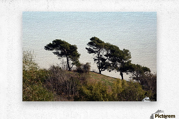 Natural Wind Blown Trees  Metal print