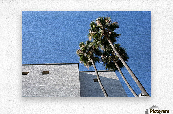 3 Palm Trees Next to Building  Metal print