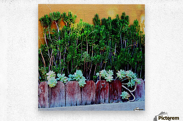 Wall of Succulents  Metal print