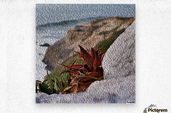 Coastal Red Aloe Vera   Metal print
