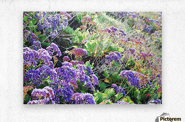Purple Wild Flowers in Dana Point CA  Metal print