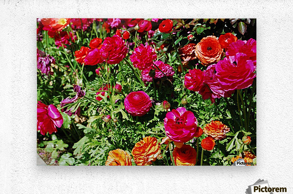 Flowers Growing in a garden  Metal print