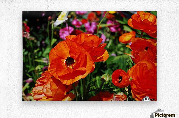 Garden with Orange Flowers Growing  Metal print