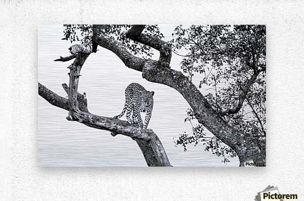 SPOTTED  Metal print