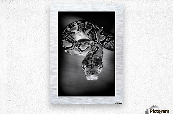 Thailand  Snake Surprise  Metal print