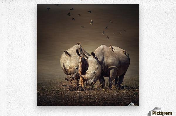 Two Rhinoceros with birds  Metal print