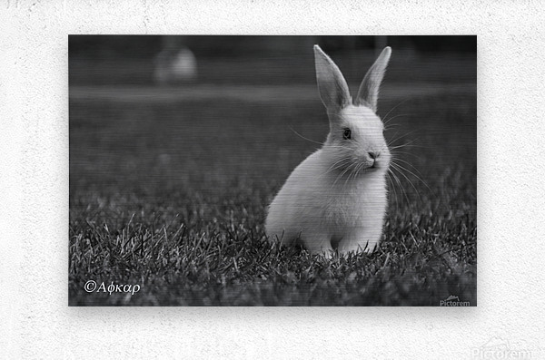 Lovely Rabbit  Metal print