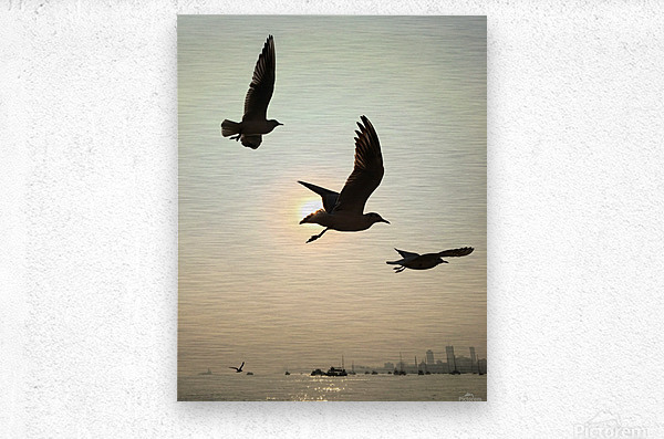Three Muskiters  Metal print