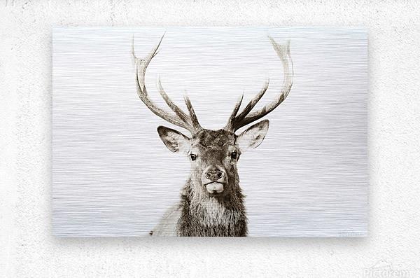 Cerf rouge  Metal print