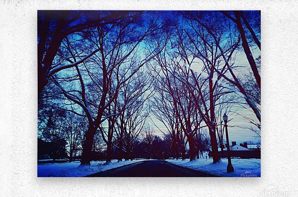 Snowy Delight  Metal print