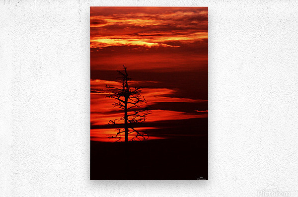 Kindled Tree  Metal print