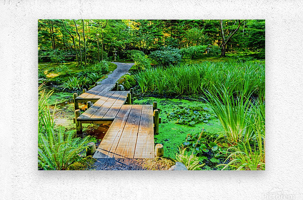 wooden bridge across a pond with duckweed and leaves of water lilies  Metal print