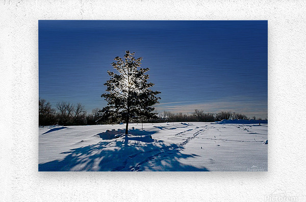 Beautiful, colorful and cold winter with snow and frost  Metal print