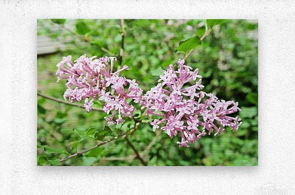 Bright Lilac   Metal print