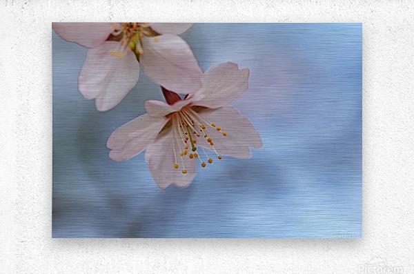 Spring Pastels  Metal print