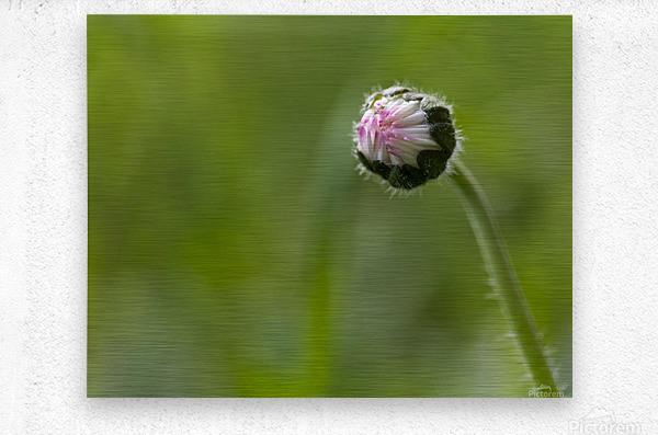 Flower bud  Metal print