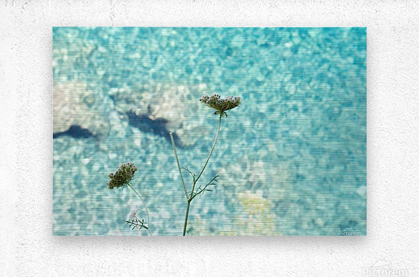 Flowers on the sea  Metal print