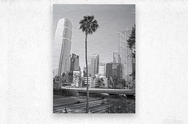 DTLA Palm Tree  Metal print