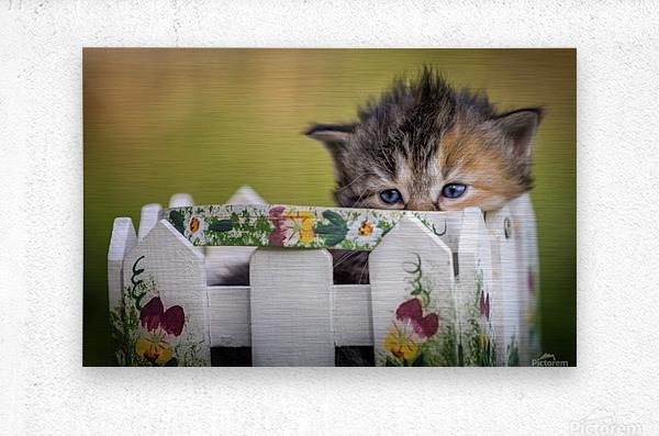 Kitten in basket  Metal print