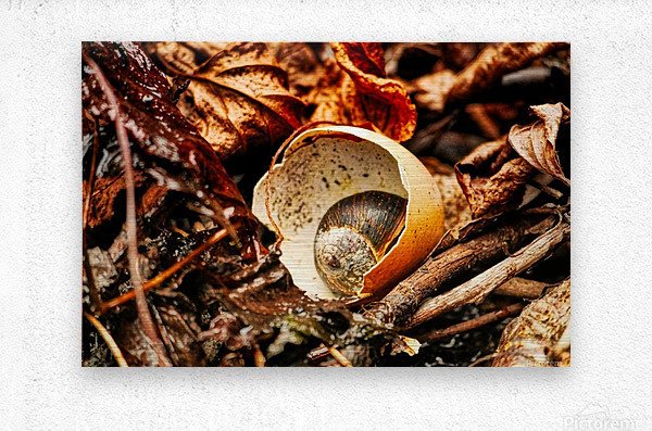 Shell in shell  Impression metal