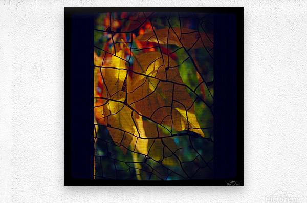 Broken Leaves  Metal print