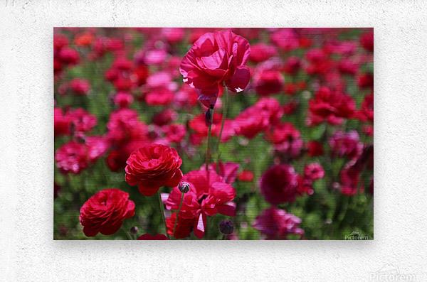 Never-ending Roses   Metal print