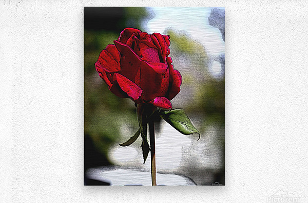 Posterized Rose   Metal print