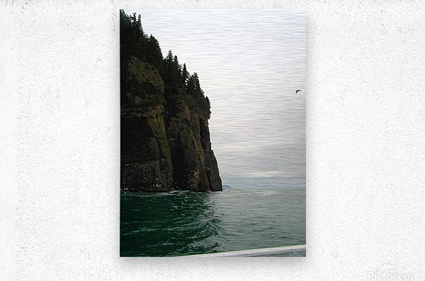Point with bird  Metal print