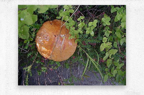 Bisquit Mushroom  Metal print