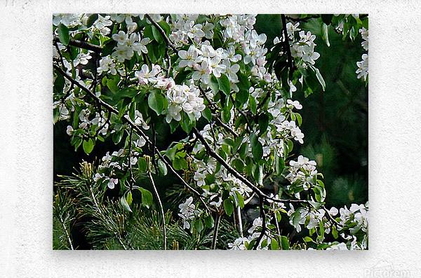 DazzleBlossoms  Impression metal