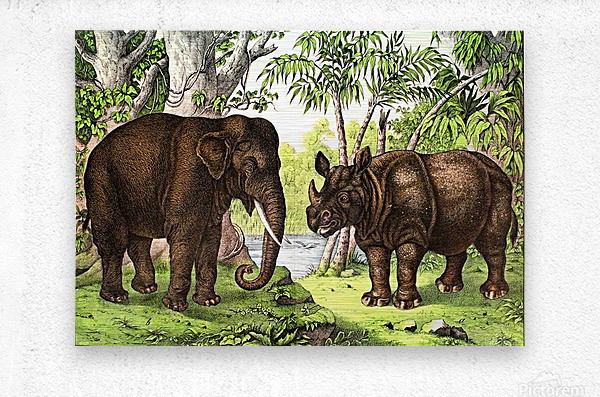 Elephant And Rhinoceros  Metal print