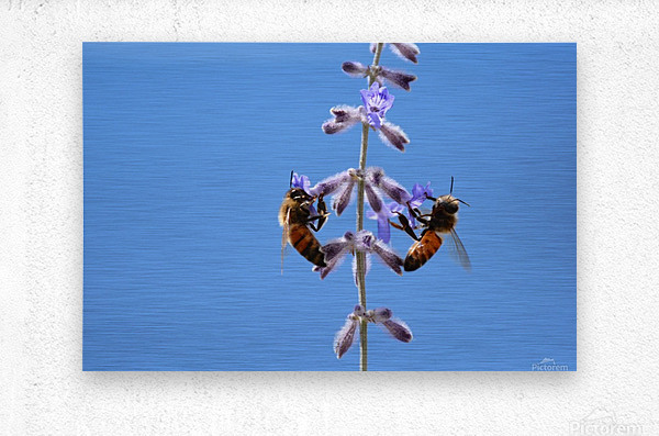 Two Bees On Vine Photograph  Metal print