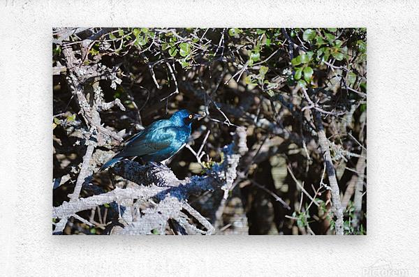 Blue Reflective Bird  Metal print