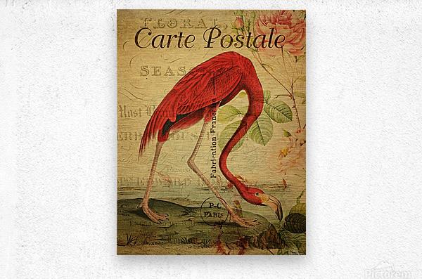 Beautiful Flamingo_OSG  Metal print