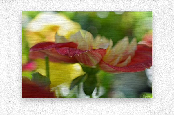 Garden Flowers Art Photograph  Metal print