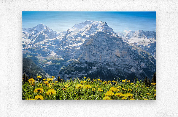 Wildflower Jubilee  Metal print