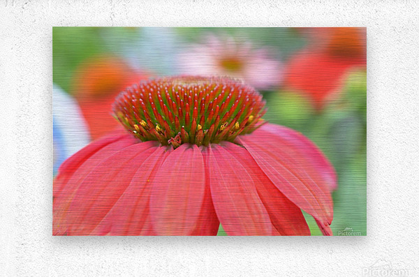 Orange Flower Photograph  Metal print