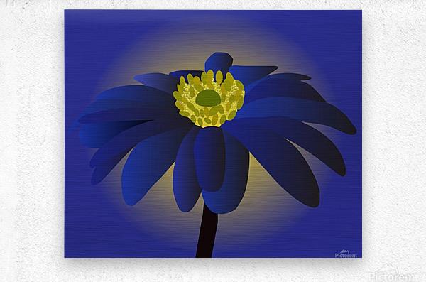 Anemone Blanda Flower Art  Metal print