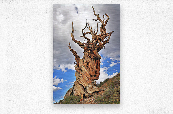 Ageless  Metal print