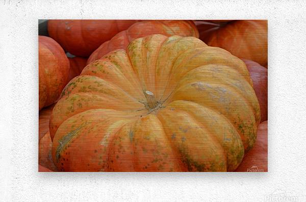 Beautiful Pumpkins Photograph  Metal print