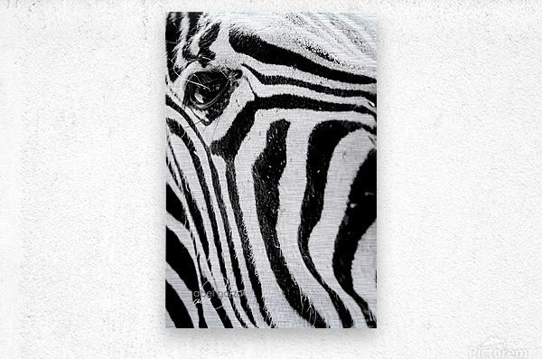 D8B_2155  Metal print