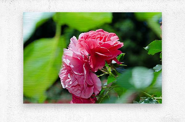 Rose Name  Metal print