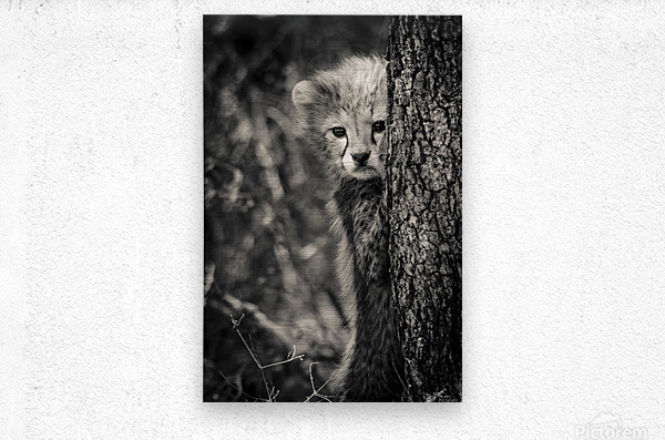 Shy but Curious  Metal print