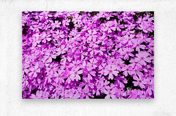 Pink Petals  Metal print
