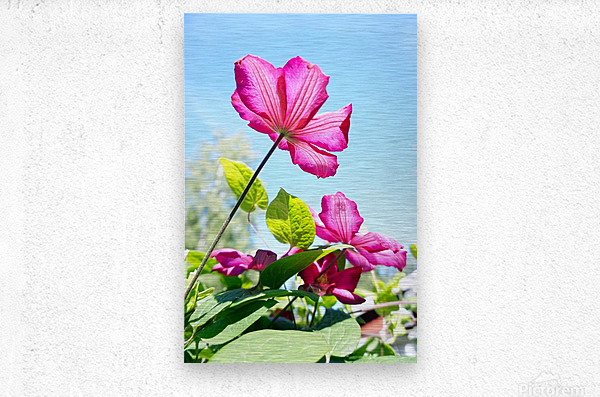 Pink flower and green leaves  Metal print