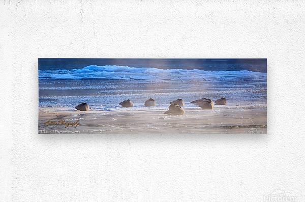 Canada Geese - APC-206  Metal print