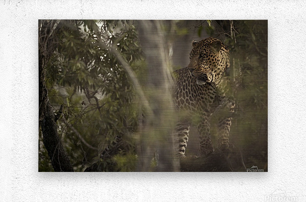 Ghosts of the Serengeti  Metal print