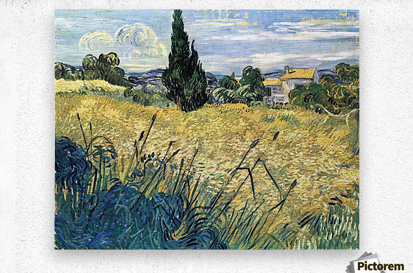 Green wheat field with cypress by Van Gogh  Metal print