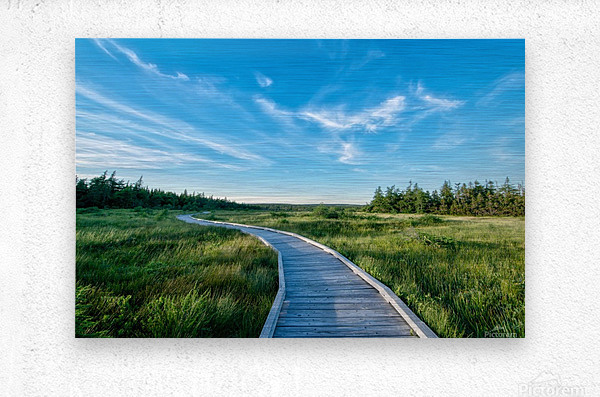 A walk at the Bog  Metal print