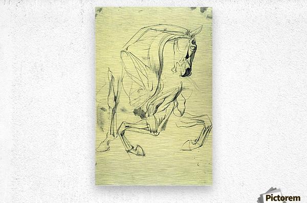 Horse study by Franz von Stuck  Metal print